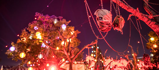A severed head hanging from a tree
