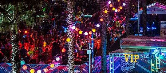 palm trees with colorful lanterns
